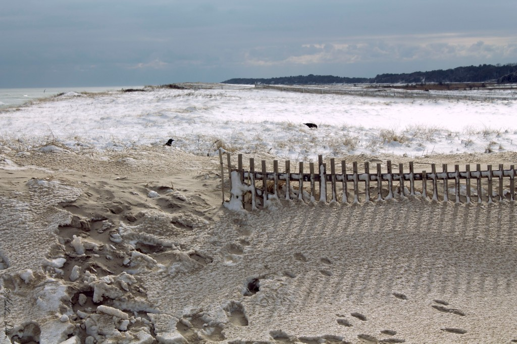Photograph of Beach Crows Nauset Winter