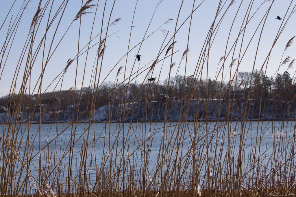 Landscape Photograph Orleans Town Cove