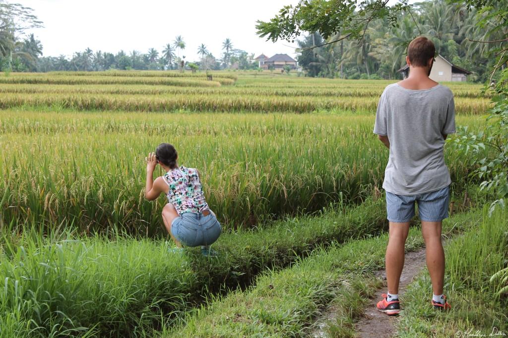 Rice Village Tourism Ubud, Bali