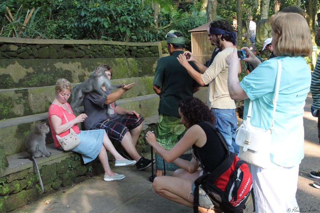 monkeytouristsbali