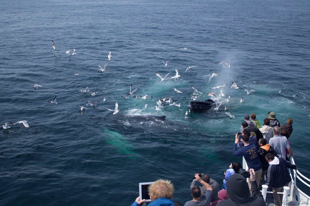 Photograph of tourists whales