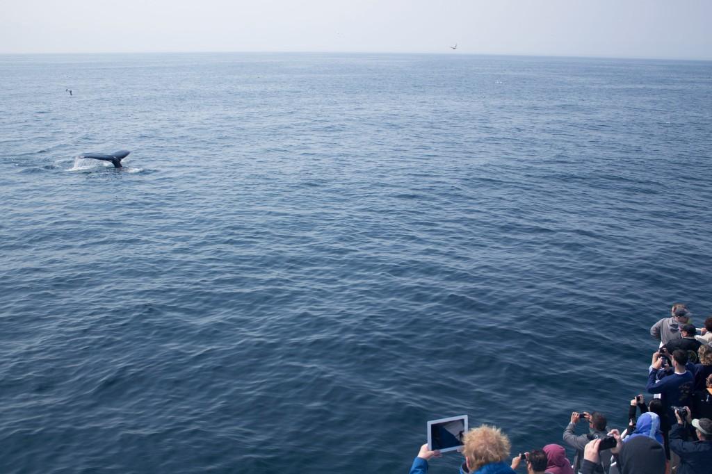 tourist-whale-tail