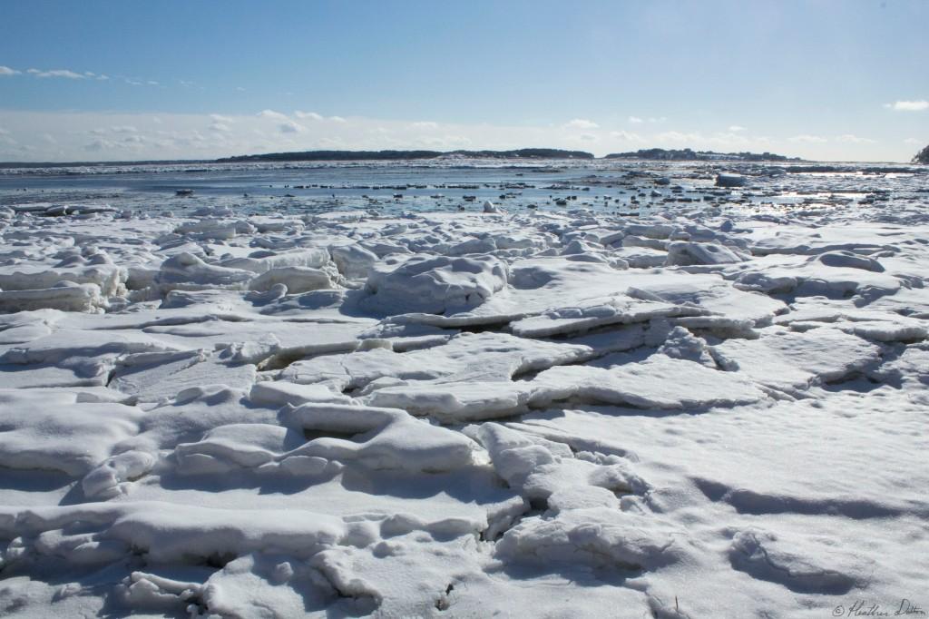 Wellfleet Frozen