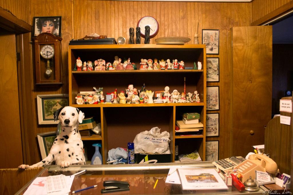 Dalmatian I LOVE LUCY HOTEL